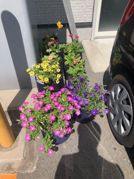 花を増やしてます。